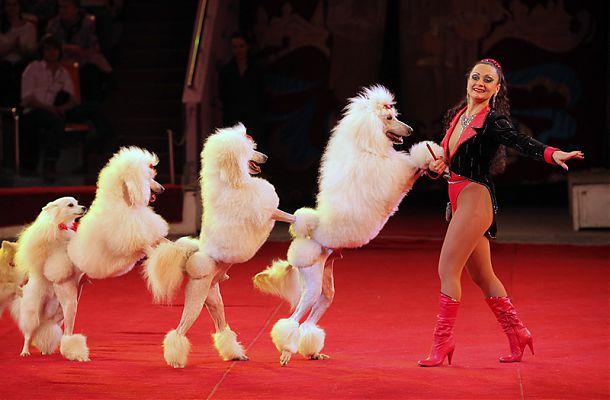 Шоу собачек, цирк в Ярославле.jpg