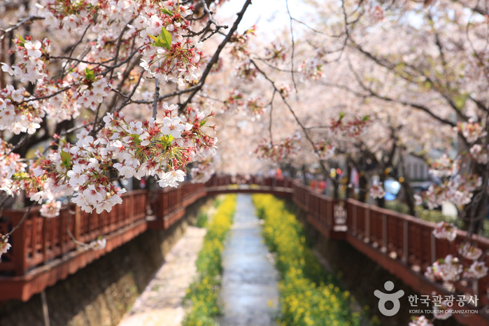 Магия цветущей вишни4.jpg