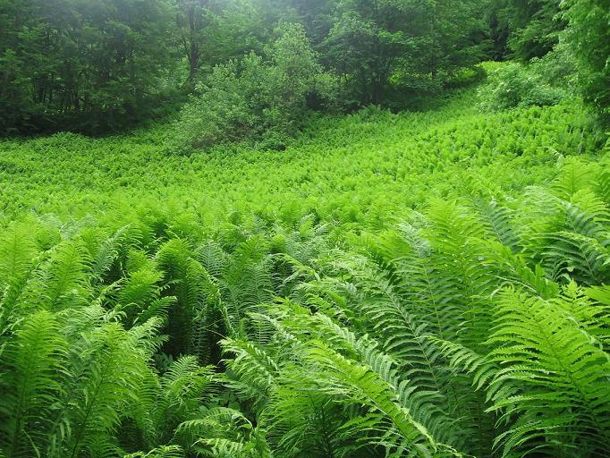 Пятьдесят оттенков зеленого — природа Абхазии.jpg