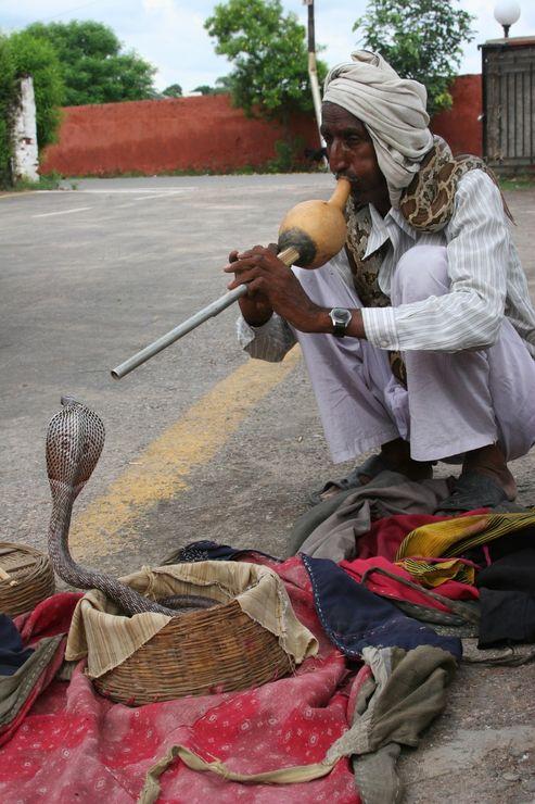 Заклинатель змей в Индии.jpg