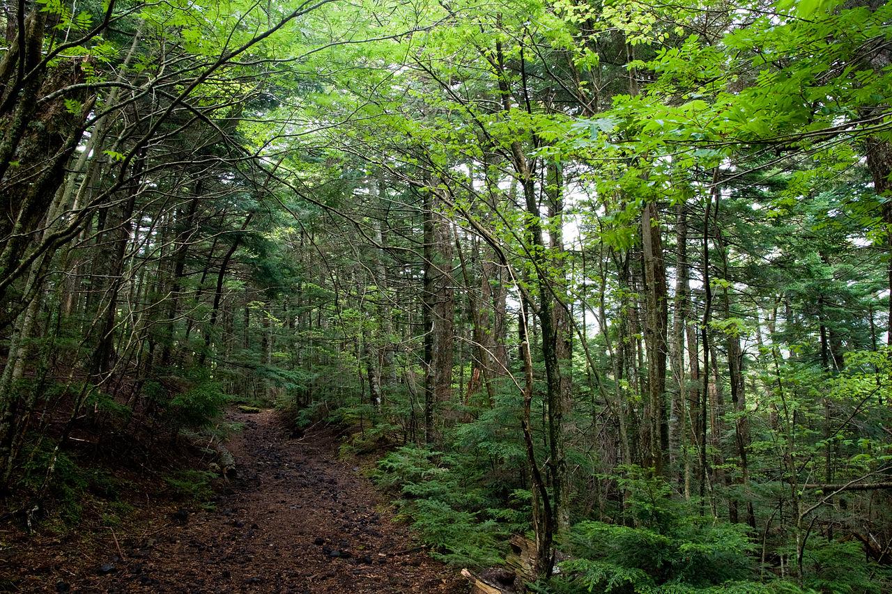Лес на склонах Фудзи