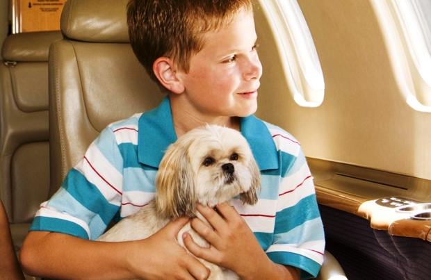 Авиабилет для собаки может обойтись дороже, чем для хозяина.jpg