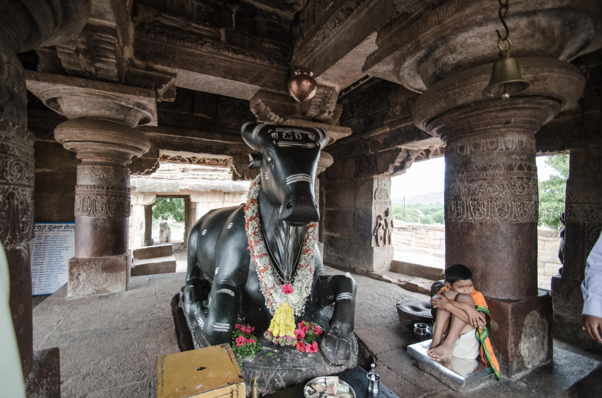 Священная корова, Паттадакал, Карнатака