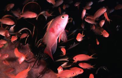 Подводные обитатели Филиппин