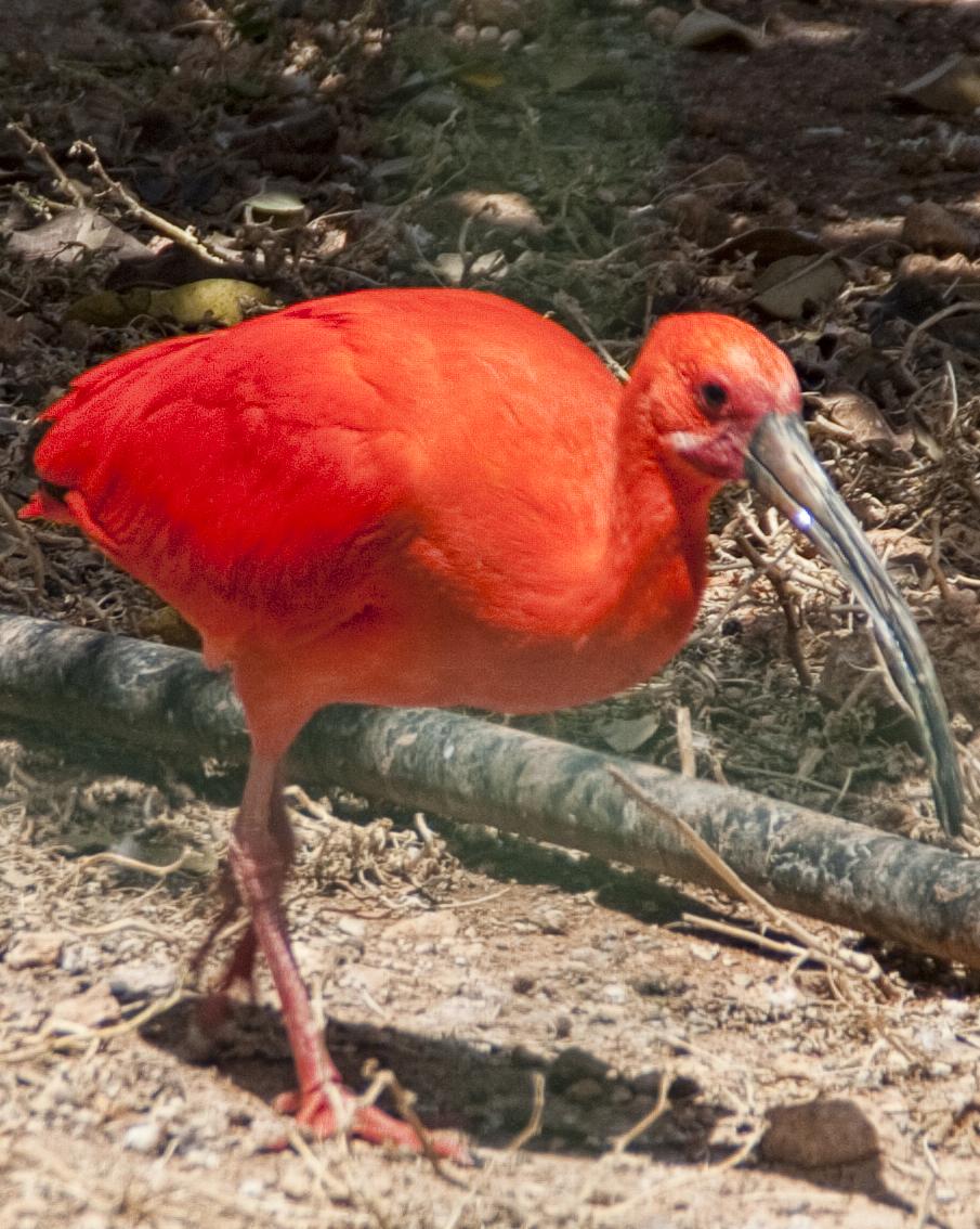 Парк птиц и его обитатель