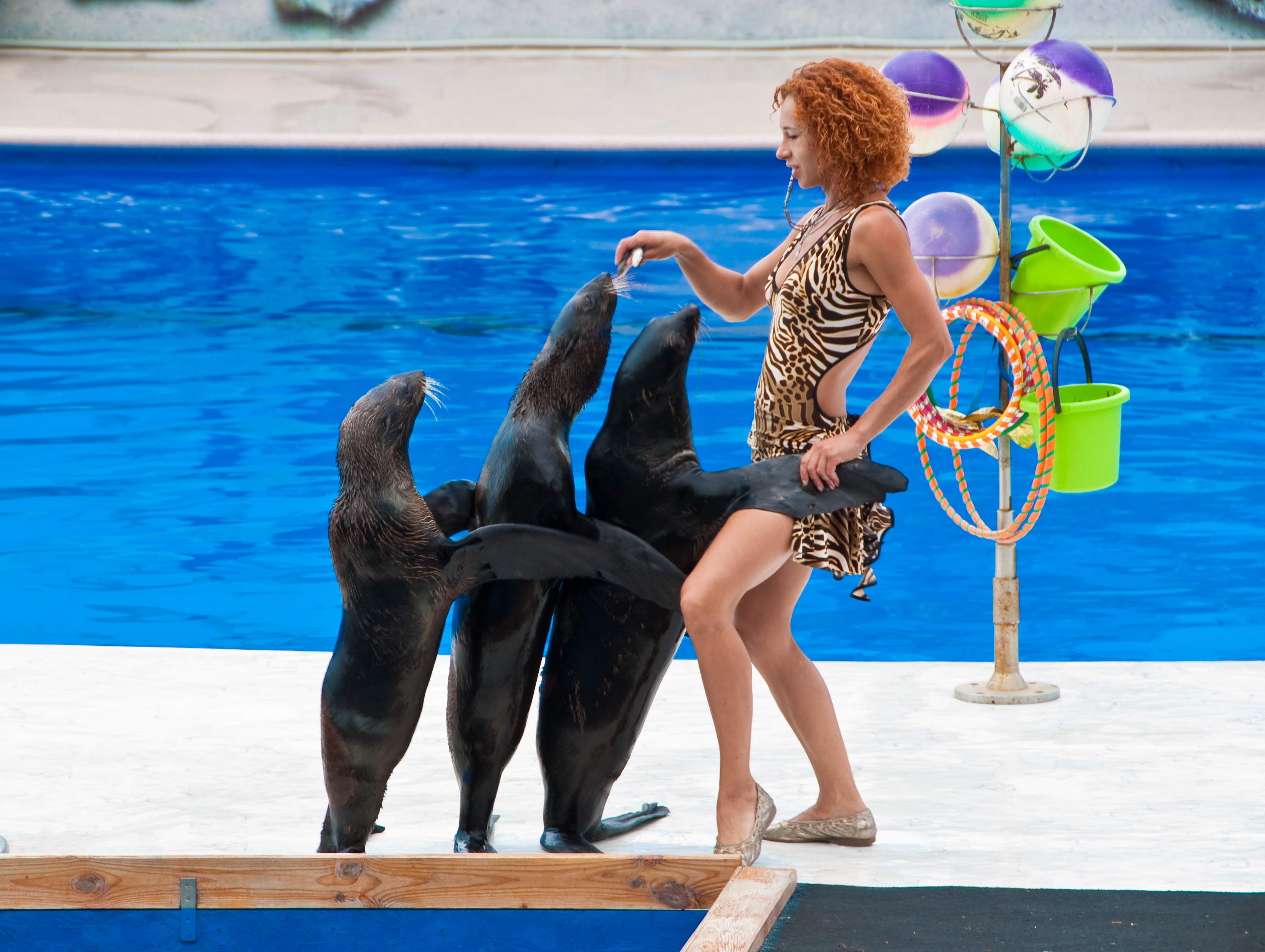 Дельфинарий в Севастополе, морские котики