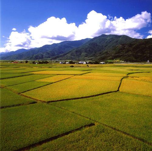 Красота рисовых полей, Тайвань