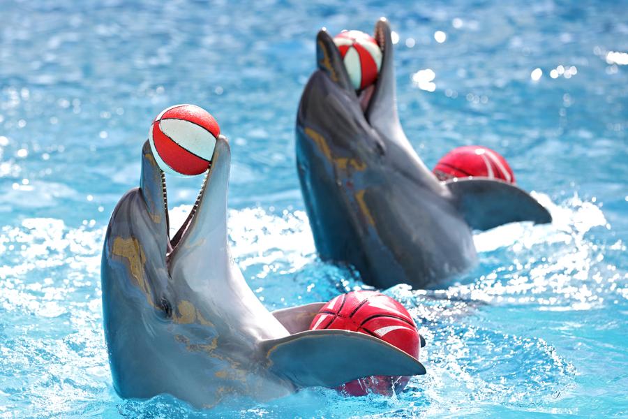 Представление в Дельфинарии в Санкт-Петербурге