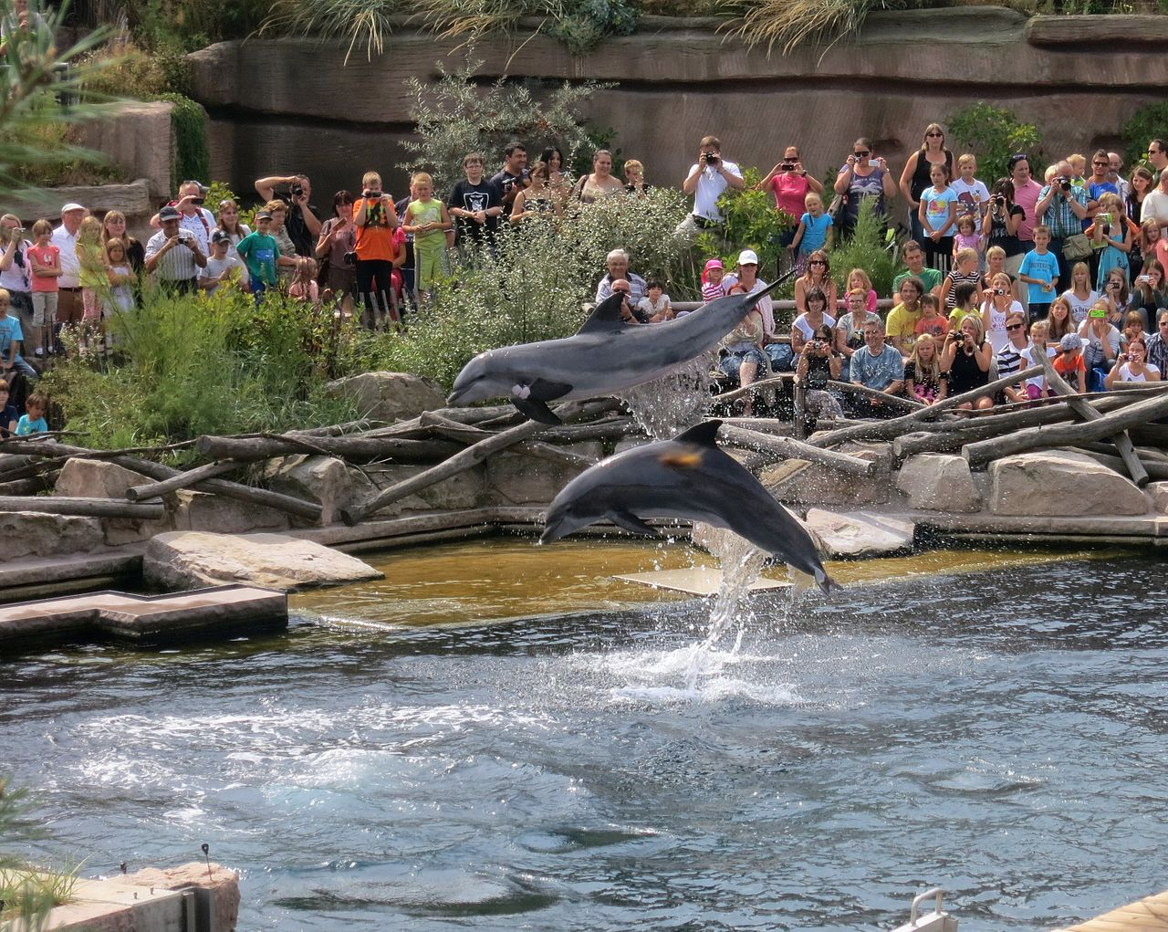 Нюрнбергский зоопарк, дельфинарий