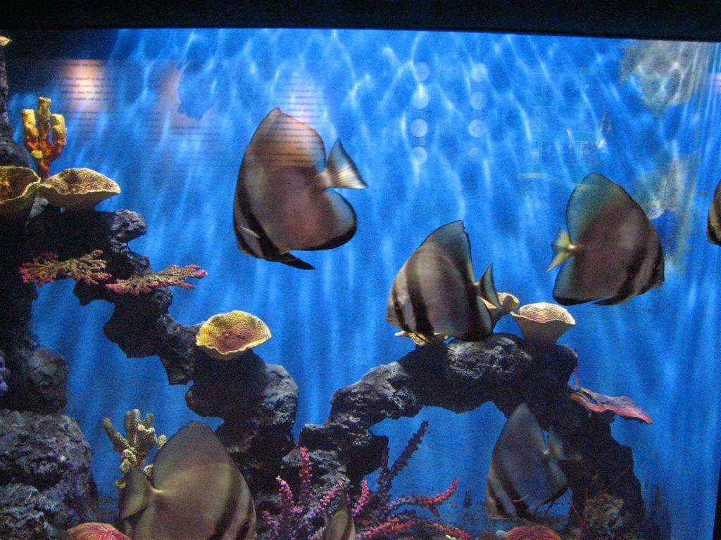 Обитатели аквариума Пхукета