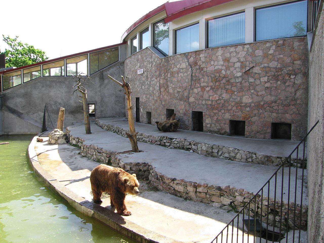 Рижский зоопарк, медведь
