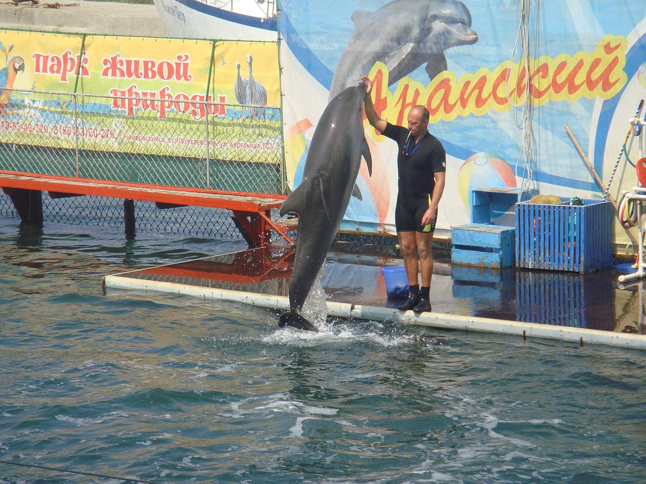 Утришский дельфинарий, Анапа