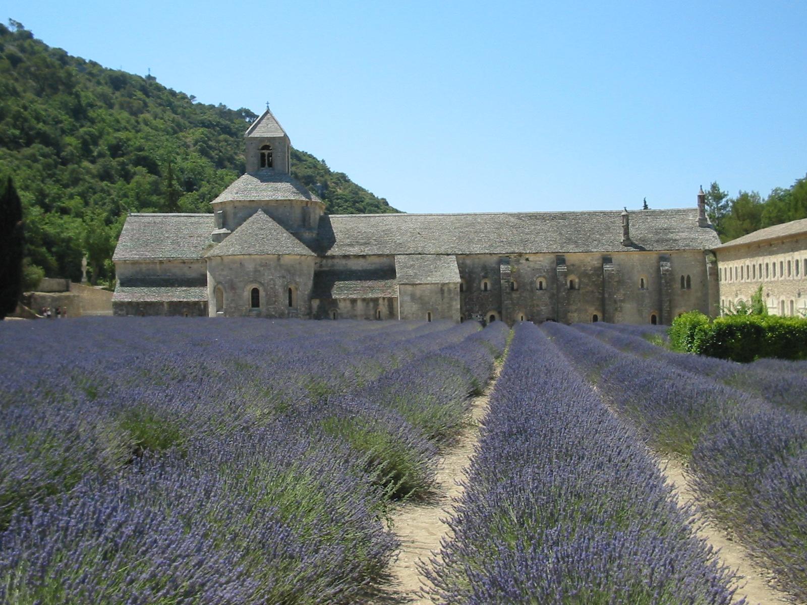 Аббатство Сенанк, поля лаванды с северной стороны монастыря