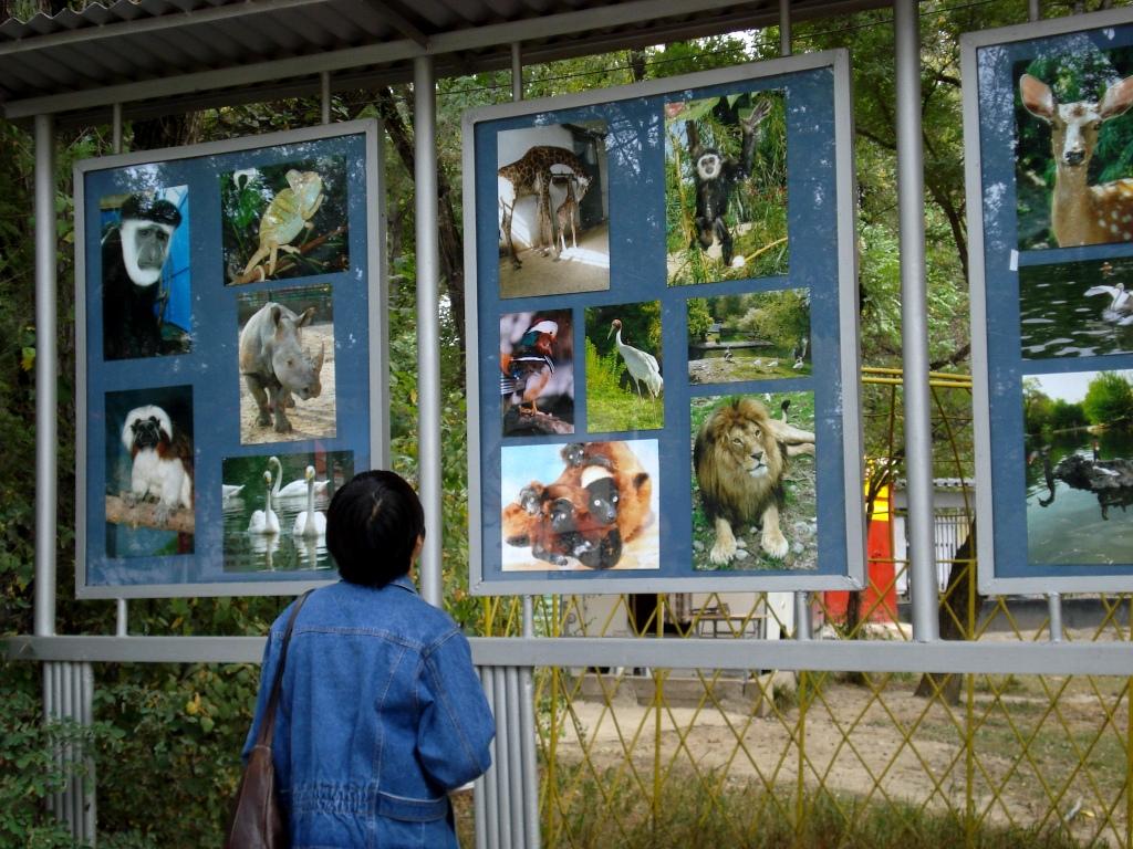 Алма-Атинский зоопарк, фотопортреты