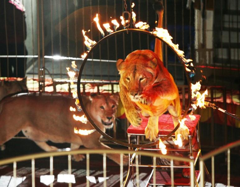 Шоу со львами, Цирк в Екатеринбурге