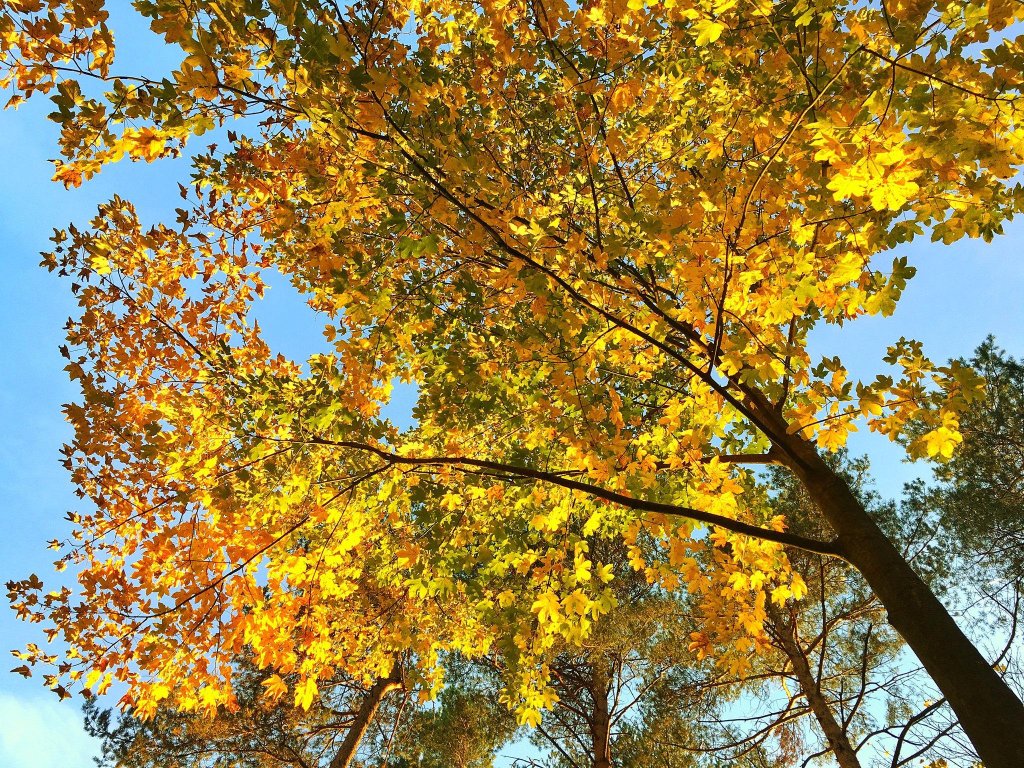 Осенние красоты Венского леса, Австрия