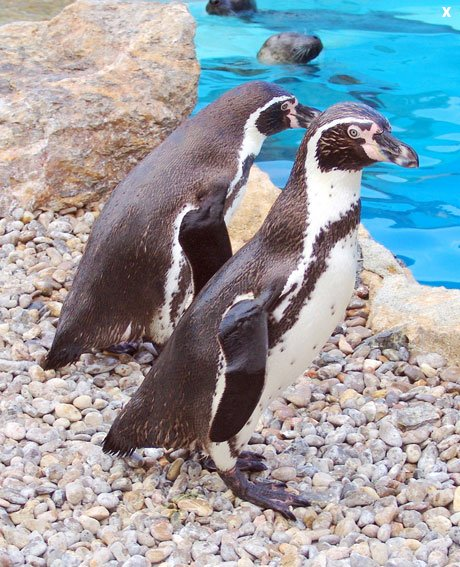 Пингвины, Аквапарк «Маринеленд», Коста-Брава