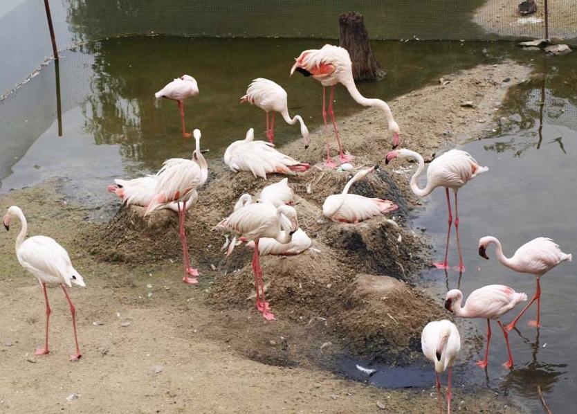 Фламинго, Ростовский зоопарк, Ростов-на-Дону