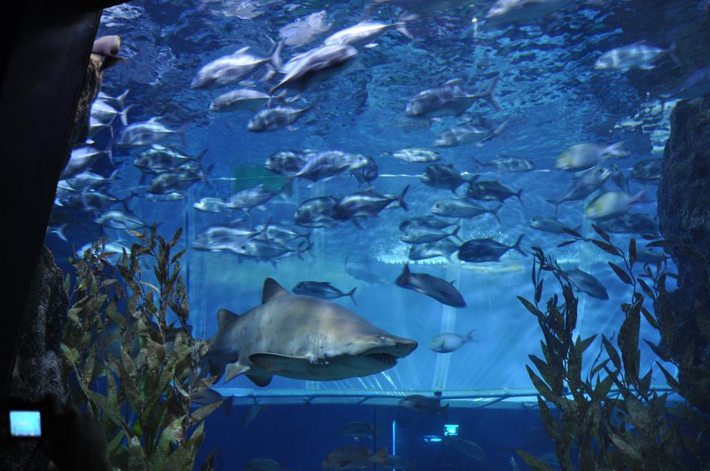 Обитатели аквариума Sea Life Bangkok Ocean World