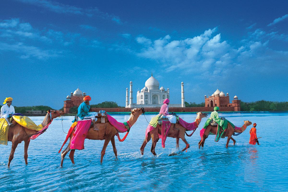 Верблюды, Тадж-Махал, Индия