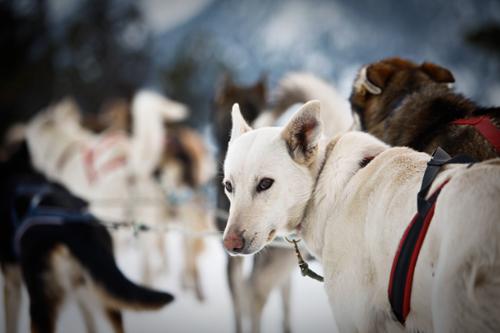 Собаки в Андорре