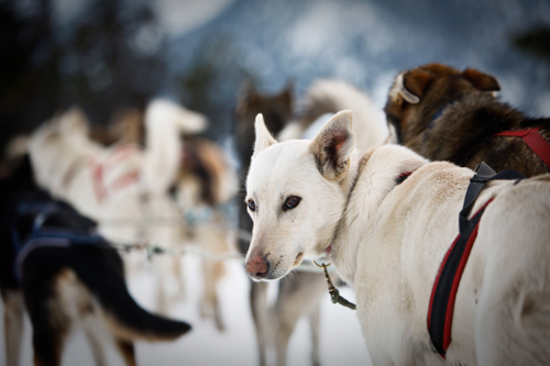 Собаки в Андорре.jpg