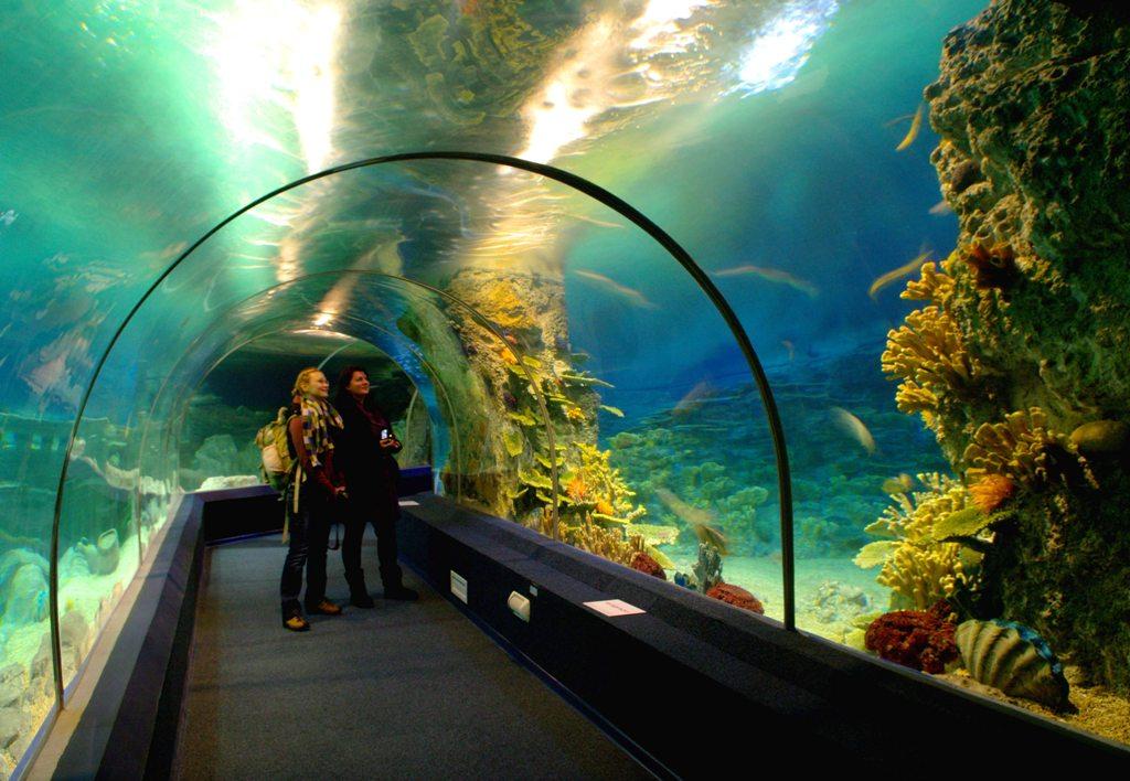 Океанариум в Сочи, туннель