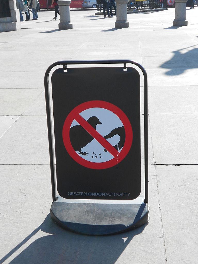 Трафальгарская площадь, не кормите голубей!