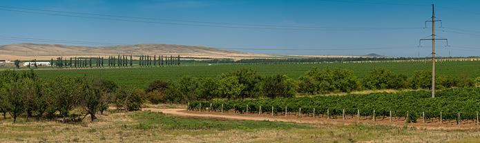 Виноградники, Фанагория, Сенной
