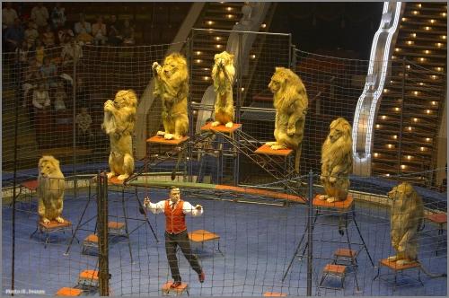 Цирк, Днепр для детей.jpg