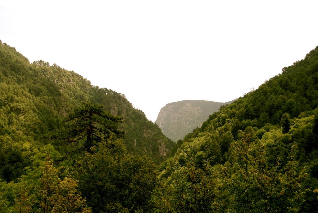 Зеленые деревья, Гора Олимп