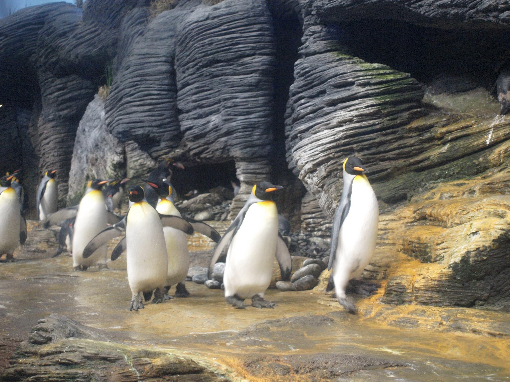 Антверпенский зоопарк, пингвины