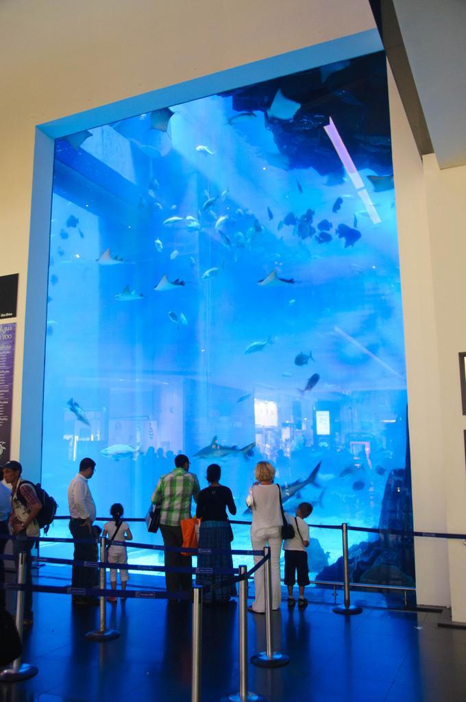 Вид на аквариум в Дубае