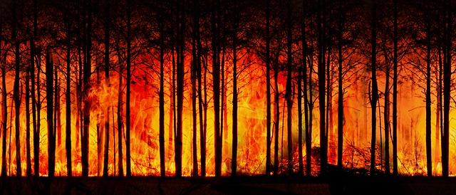 Forest-fire-3836834 640.jpg