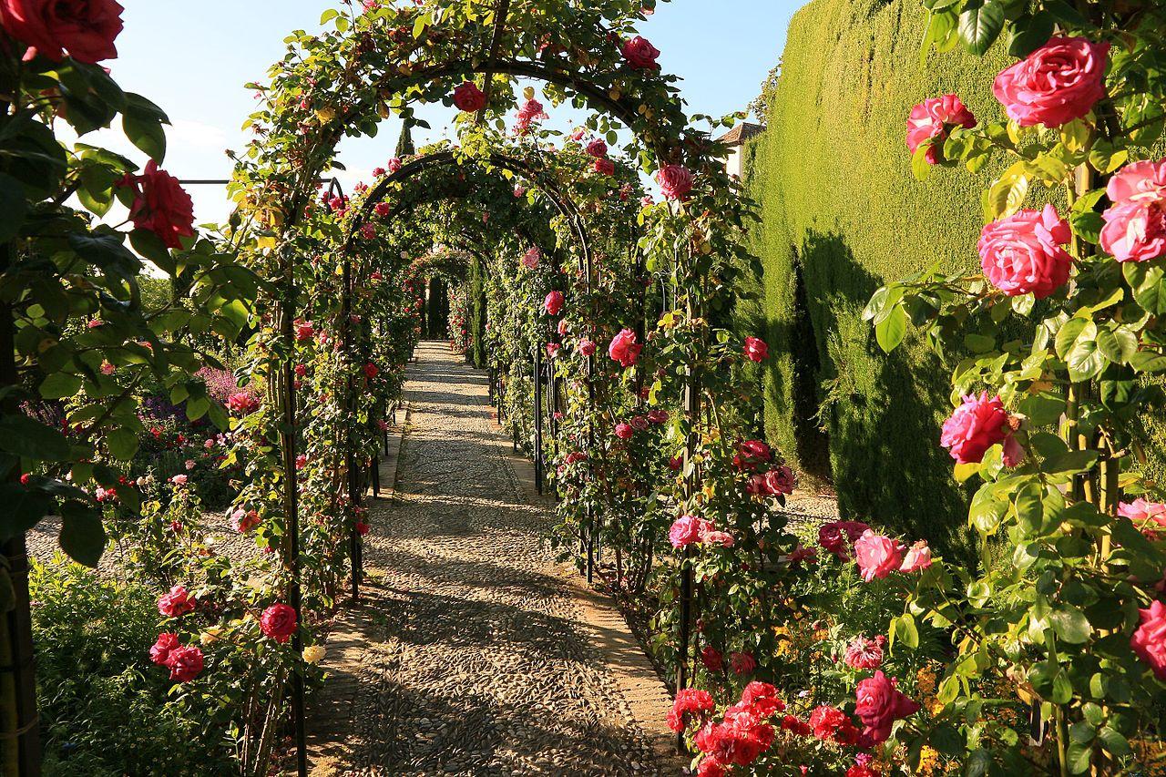 Сады Хенералифе, розарий