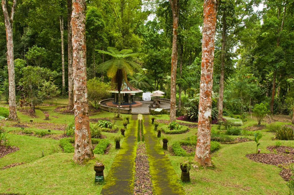 Ботанический сад Бали, аллея