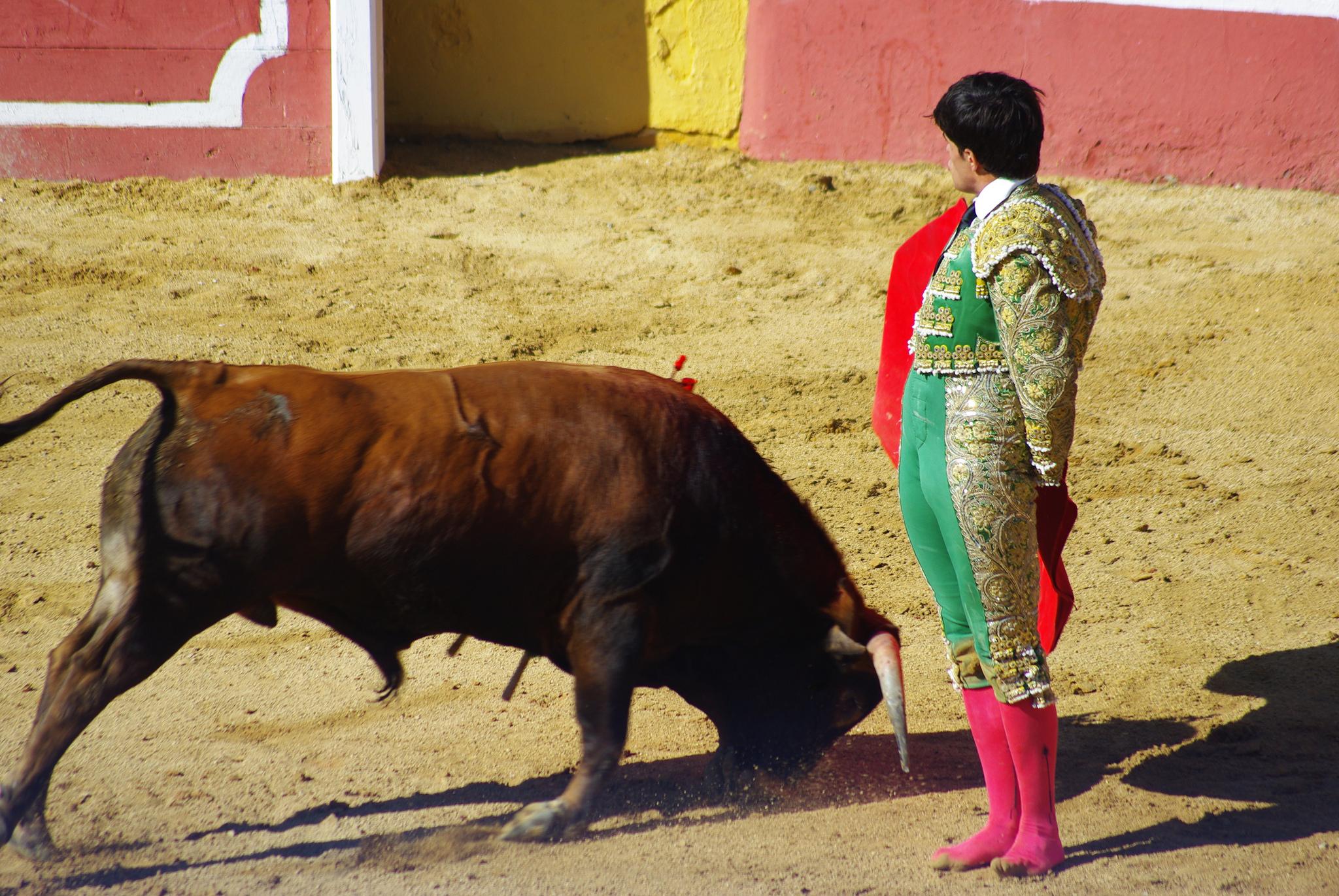 Бой матадора с быком