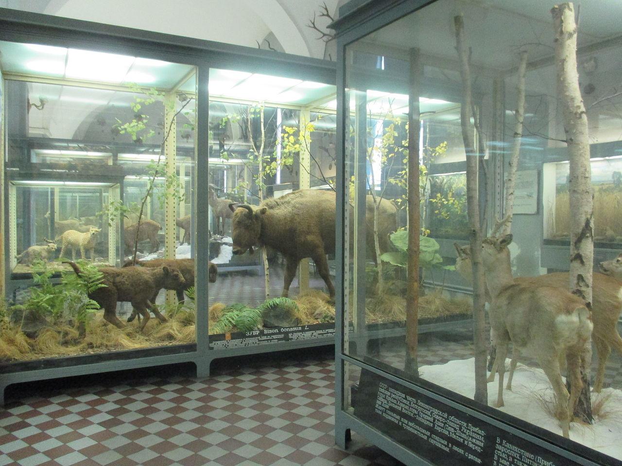 Зоологический музей РАН, отдел млекопитающих