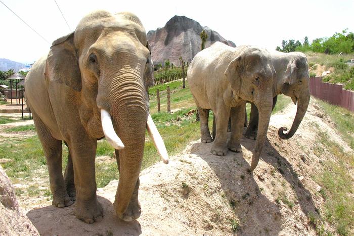 Слоны в Бенидорме