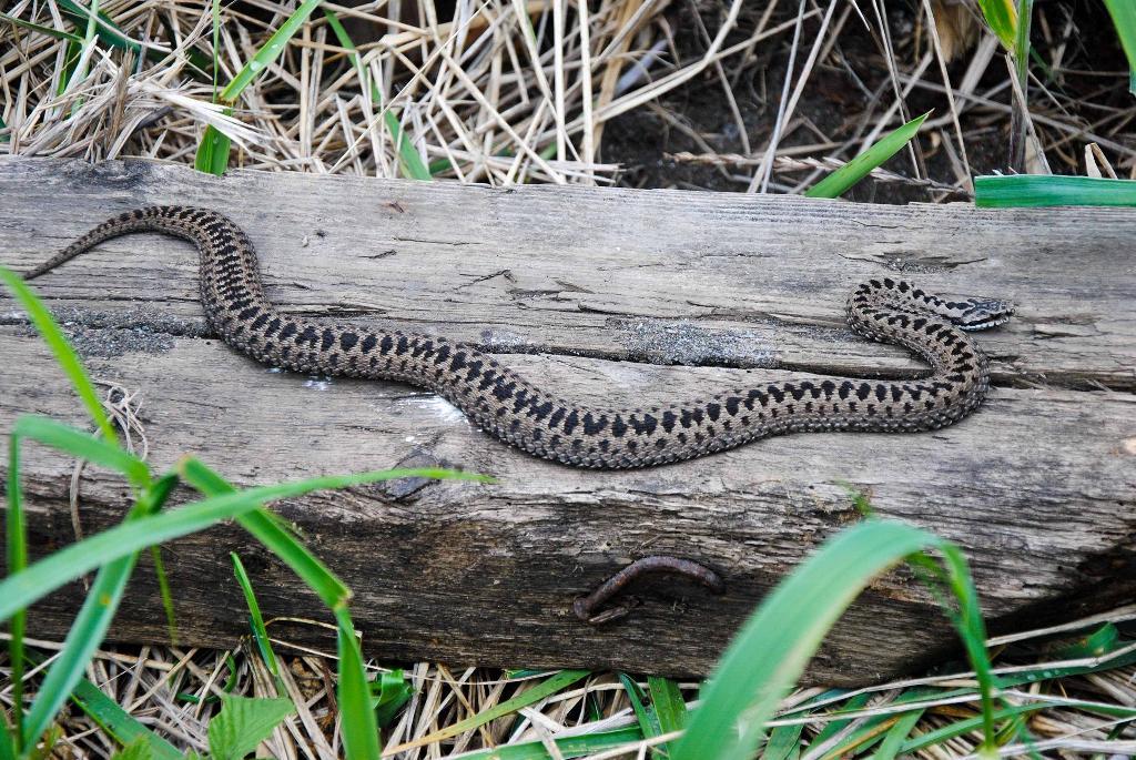 змеи амурской области фото и название салаты курицей, наверно
