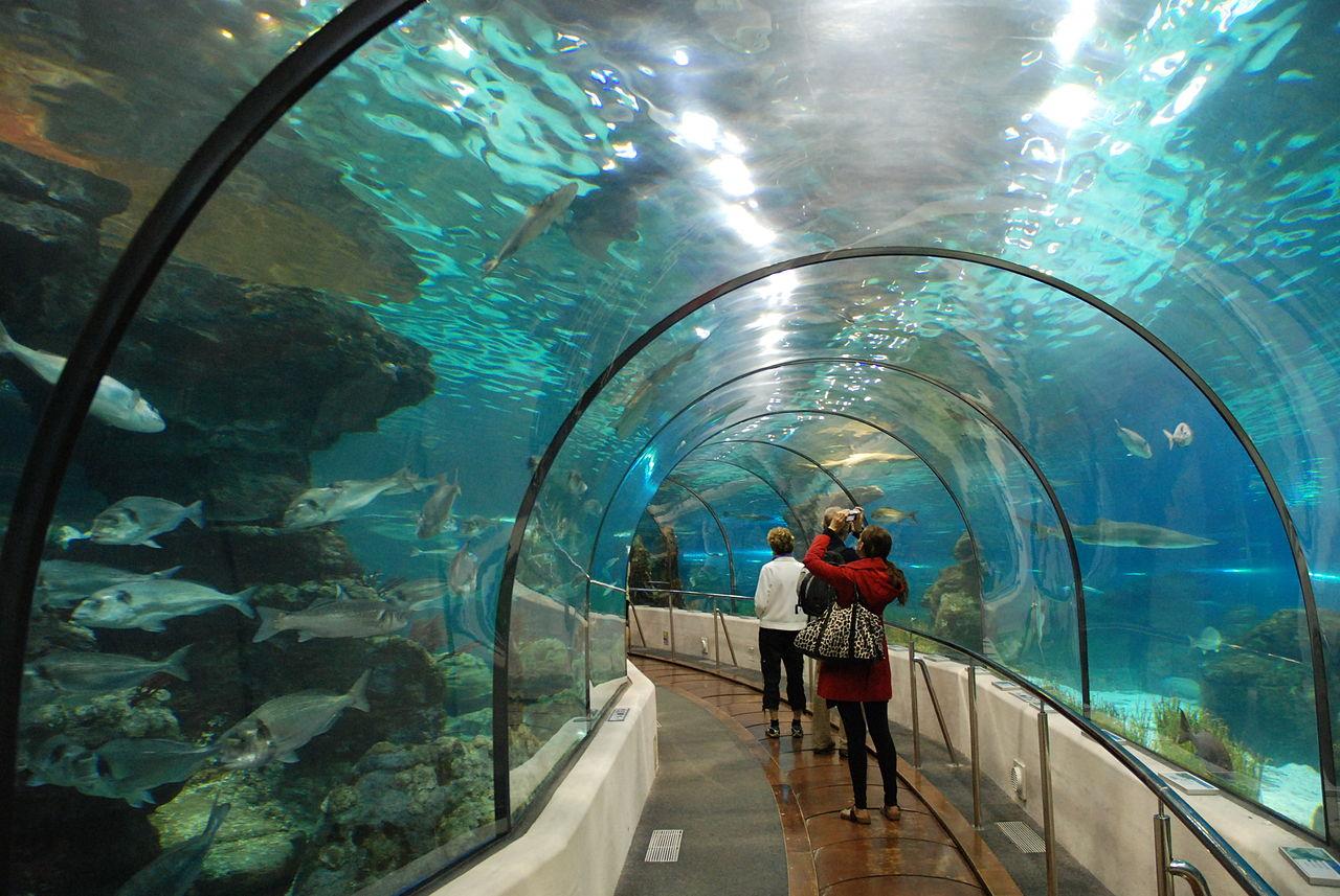 Аквариум Барселоны, подводный стеклянный туннель