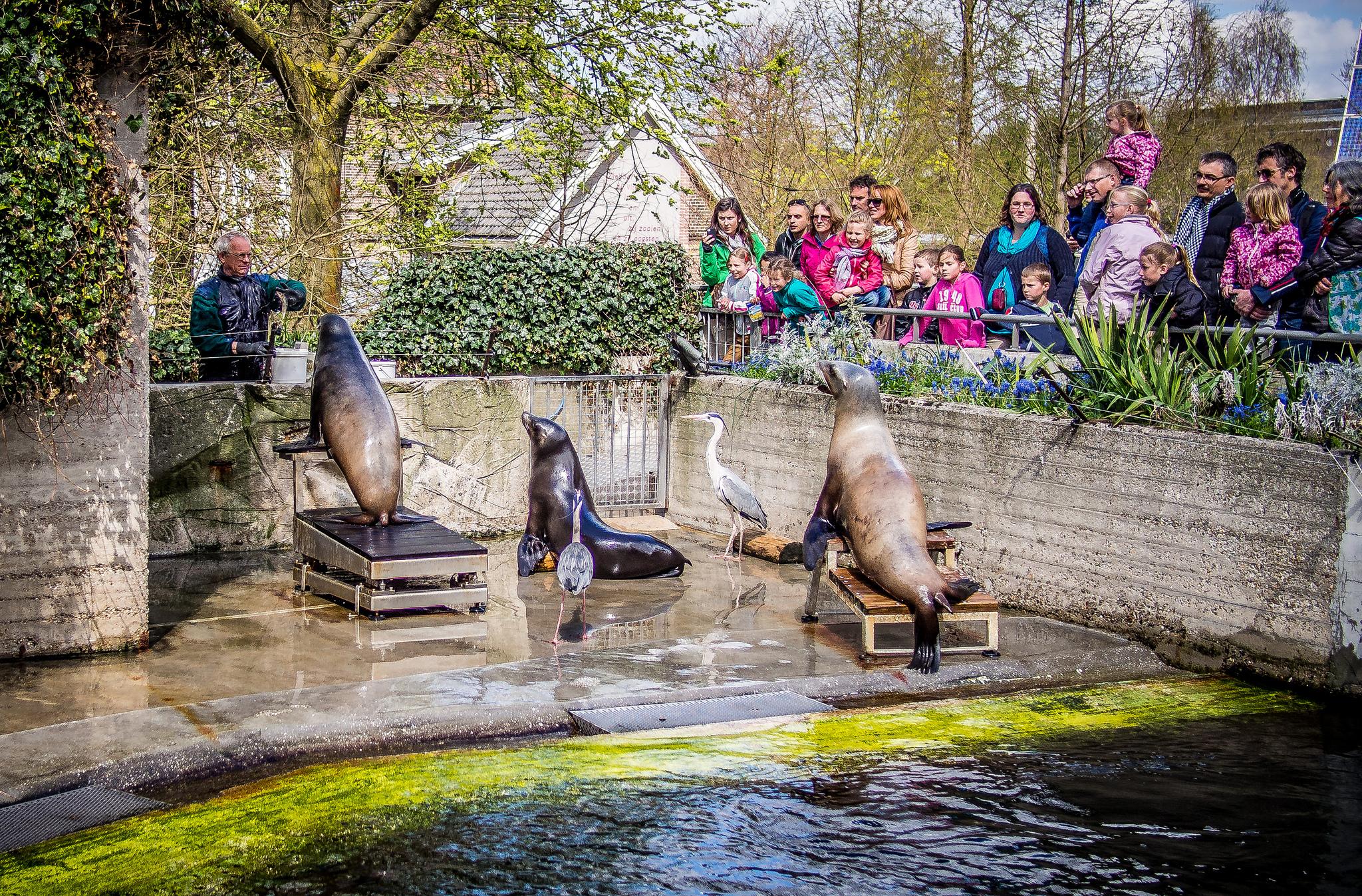 Зоопарк в Амстердаме, представление