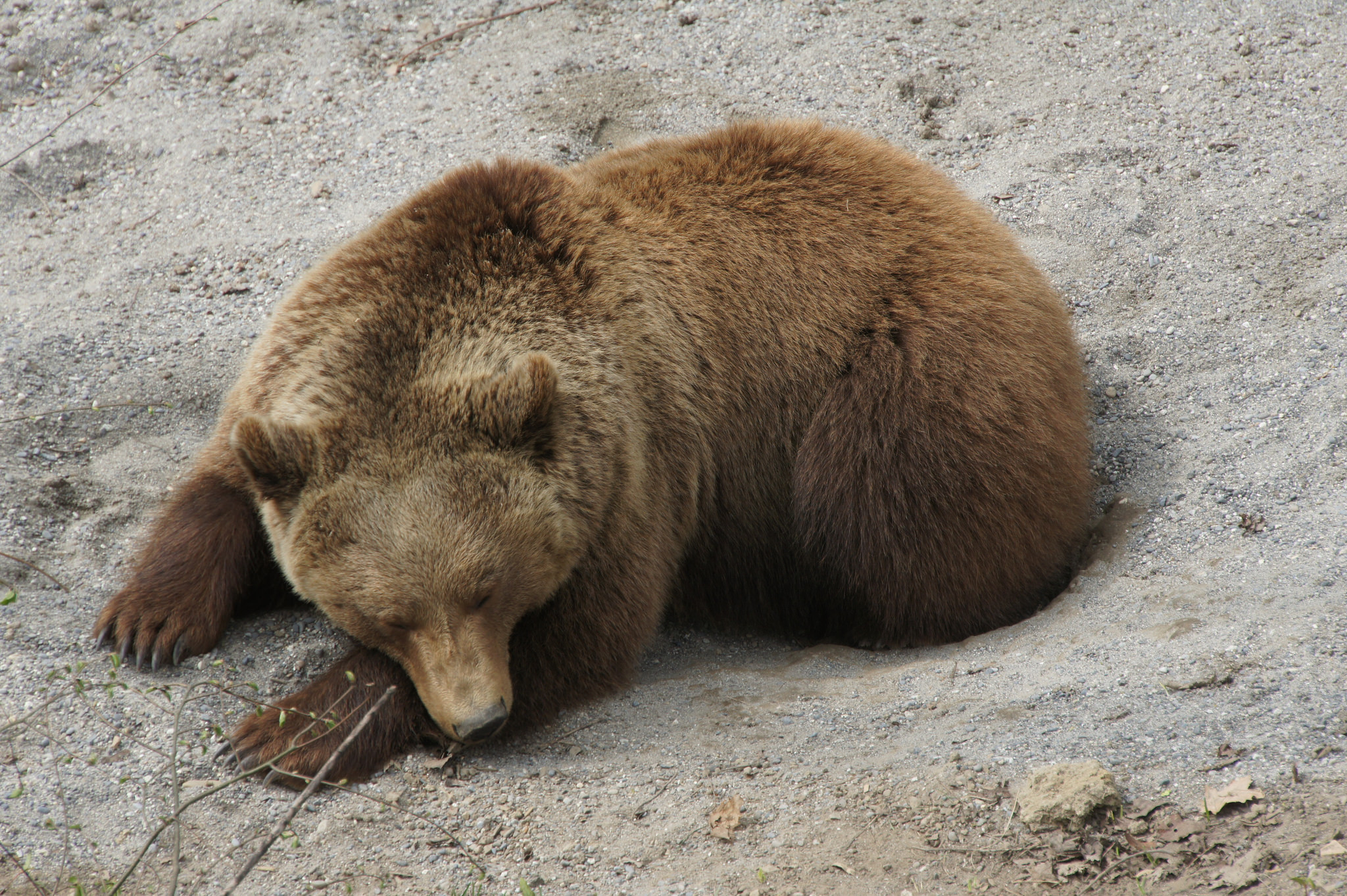 Обитатель Медвежьего парка