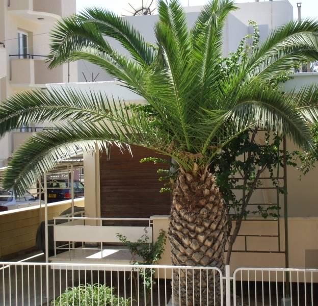 Отели Кипра Рейтинг отелей и гостиниц мира TopHotels