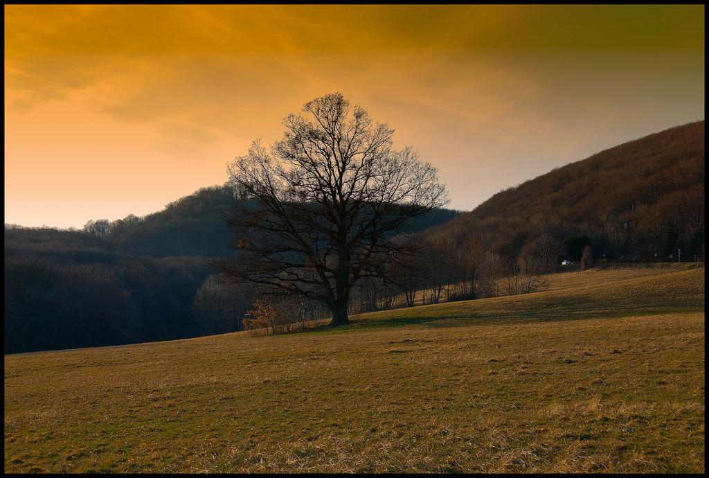Одинокое дерево рядом с Венским лесом, Австрия
