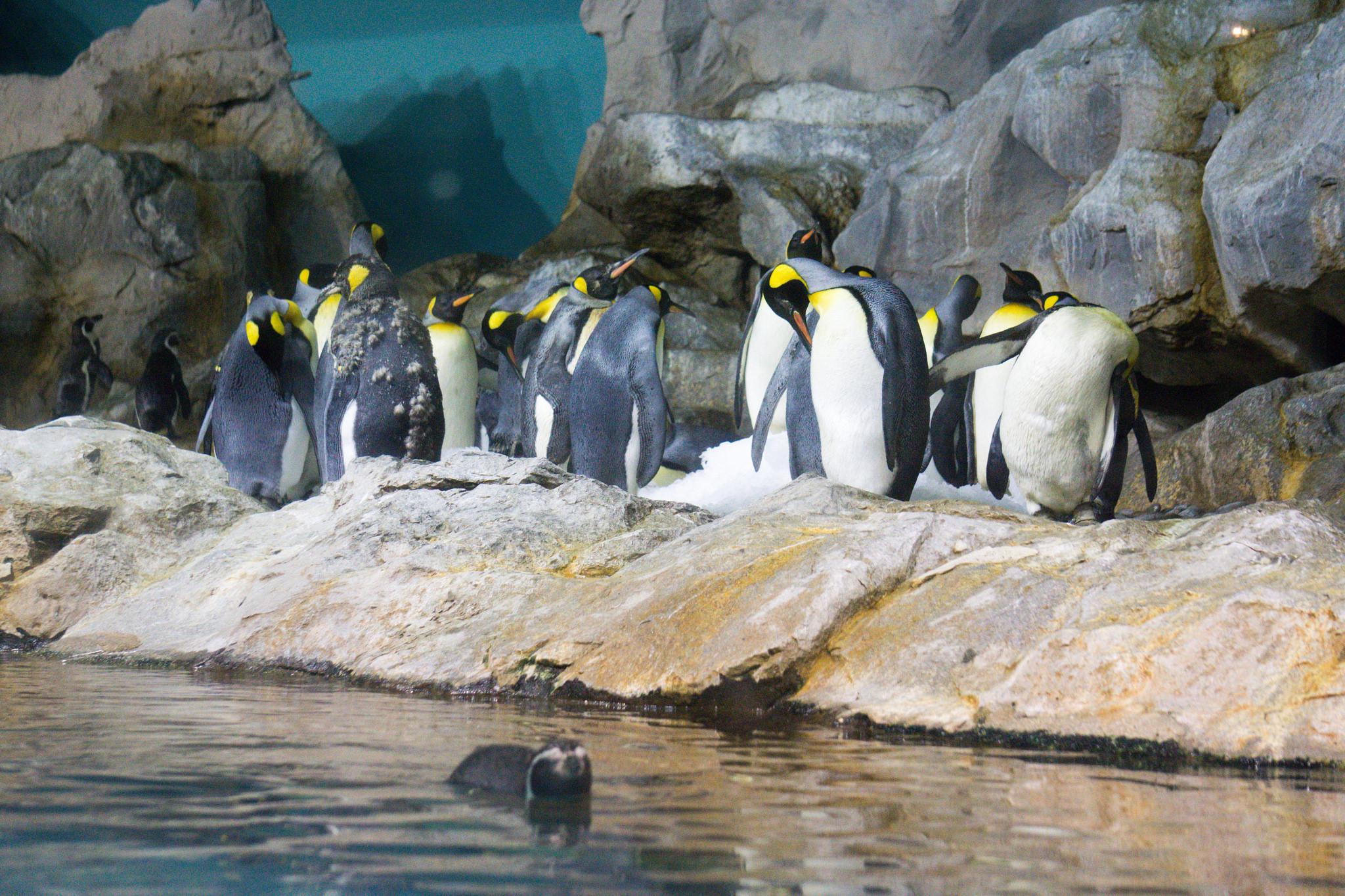 Пингвины, Парк птиц Джуронг, Сингапур