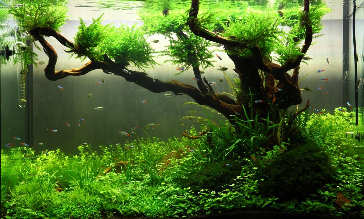 Растительный аквариум, Аптекарский огород, Москва