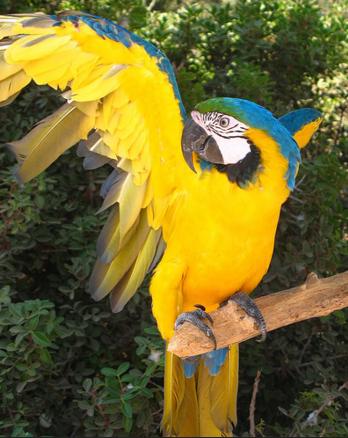 Житель парка птиц