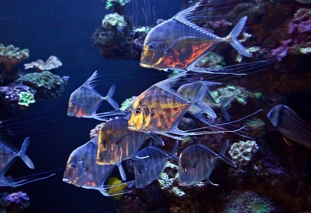 Обитатели аквариума Пальма-де-Майорки