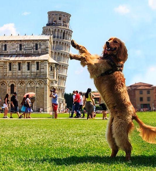 10 причин не посещать италию Пизанкая башня 2.jpg